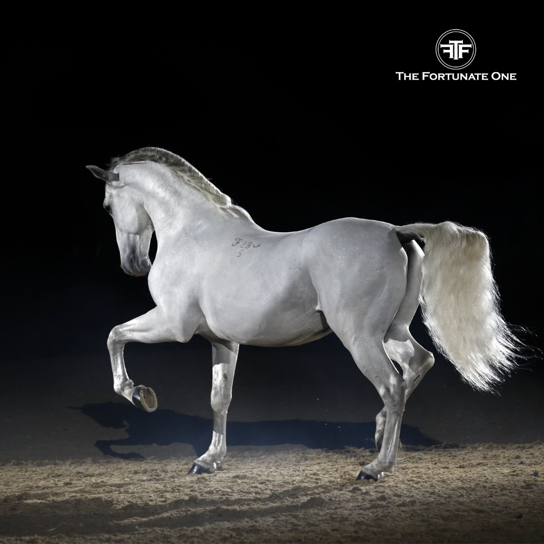 The Lipizzan horse breed is known as one of the oldest horses breed and it origins from the area of today's Slovenia. SPIRIT AND SYMBOLISM